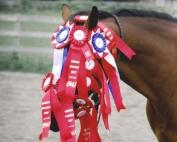 horse head-ribbons